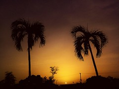 Sunset (Carlos A. Aviles) Tags: sunset ocaso sol sun orange naranja palm palma trees arboles color outside sky cielo