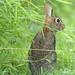 Grass eater
