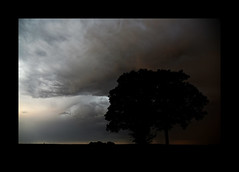 (David Ian Ross) Tags: silhouette storm cloud trees maple acer pseudoplatanus sycamore evening