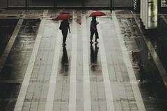 red umbrellas (Sat Sue) Tags: lumix micro four thirds 43 gx7mk2 gx80 gx85 japan fukuoka rain road shadow silhouette