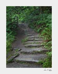 Aber Steps (Simon Caplan) Tags: wales northwales snowdonia welshlandscape landscape landscapephotography woodlandlandscape