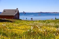 Nuuk (timon.blub) Tags: flowers nuuk greenland arctic travel