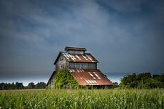 Old barn....new corn... (petec1113) Tags: barn corn clouds wisconsin janesville sony farm backroads