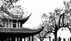 CutOut.jpg (Klaus Ressmann) Tags: omd em1 china hangzhou klausressmann westlake winter architecture blackandwhite contrast flicvarious pavilion trees omdem1
