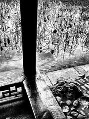 Contemplation.jpg (Klaus Ressmann) Tags: omd em1 china hangzhou klausressmann westlake winter balustrade blackandwhite flicvarious pavilion plants omdem1