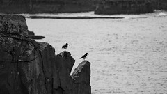 North Western Scotland (virtualwayfarer) Tags: scotland unitedkingdom lairg highland northwestern northwest roadtrip northcoast500 visit travelphotography traveling travel landscape landscapes nature natural rough raw alexberger virtualwayfarer sonyalpha a7riii sonynordic coast coastal fjord loch lochs sea seaside seascape naturalwonder world cliff cliffs arch rock rocky bird birds costal black whtie blackandwhitephotography inspiration