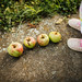 Toddler's feet and four ripe apples on the concrete. Playing with apples in the park