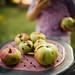Kleines Mädchen isst Äpfel