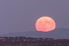 moonrise (perez rayego) Tags: luna moon moonrise ortolunar naturaleza nature paisaje landscape