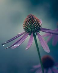 |Macro| (stevepe81) Tags: makro macro pflanze sony90mmf28 blume moody blumenundpflanzen outdoor lightroom sonyalpha6300