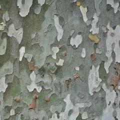 DSC_0911-2 (Marco Forgione) Tags: 2019 albero dettaglio lagodigarda platano vacanza