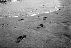 walking (Ulla M.) Tags: analogphotography analogue analog olympusmju schwarzweis sw bw bnw grain selfdeveloped selbstentwickelt beach strand spuren fusspuren dof agfaapx100 rodinal umphotoart filmphotography filmshooter film filmisnotdead kleinbild 35mm reflectaproscan10t