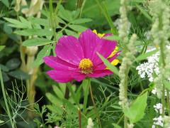 IMG_2716 (Monty Jahn) Tags: blumen blumenwiese wildblumen gerlingen badenwürttemberg flowers blüten fleur flor natur nature autumn blätter foliage feld field
