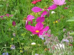 IMG_2713 (Monty Jahn) Tags: blumen blumenwiese wildblumen gerlingen badenwürttemberg flowers blüten fleur flor natur nature autumn blätter foliage feld field