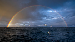 Ocean bow (jarnasen) Tags: fuji 1024mm xf1024mmf4 freehand handheld view wide angle rainbow perspective ocean sea water waves birds seagulls blue rain storm weather nrk norway norge geo geotag kalsholmen islands fiords co copyright järnåsen jarnasen gallery mood evening dusk