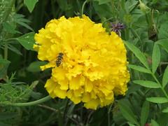 IMG_2715 (Monty Jahn) Tags: blumen blumenwiese wildblumen gerlingen badenwürttemberg flowers blüten fleur flor natur nature autumn blätter foliage feld field