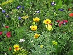IMG_2707 (Monty Jahn) Tags: blumen blumenwiese wildblumen gerlingen badenwürttemberg flowers blüten fleur flor natur nature autumn blätter foliage feld field