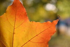 beautifulautumn (vladapo165) Tags: autumn nature leaf tree yellow red photo photographer vladapo165 september october november осень природа лист деревья жёлтый красный фото фотограф сентябрь октябрь ноябрь