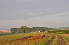 Blick auf Klausmarbach (Uli He - Fotofee) Tags: ulrike ulrikehe uli ulihe ulrikehergert hergert nikon nikond90 burghaun steinbach klausmarbach rosbach plätzer morgenspaziergang fleur sheltie shetlandsheepdog kühe