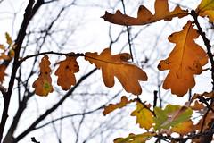 leaf (vladapo165) Tags: autumn nature leaf tree yellow red photo photographer vladapo165 september october november осень природа лист деревья жёлтый красный фото фотограф сентябрь октябрь ноябрь