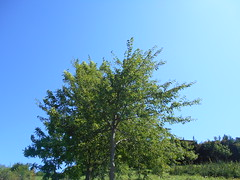 Abuztuko beroak (eitb.eus) Tags: eitbcom 18363 g153265 tiemponaturaleza tiempon2019 verano bizkaia zaldibar unaigarcia