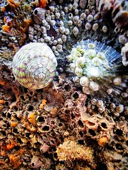 Sealife discovery inside Church Door Cove (Stéphanie Bourgeois) Tags: wales pembrokeshire chuchdoor beach sea life shells seaweed anemones rock sand ocean coast nature landscape explore holiday summer break hike discovery