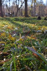 sunray (vladapo165) Tags: autumn nature leaf tree yellow red photo photographer vladapo165 september october november осень природа лист деревья жёлтый красный фото фотограф сентябрь октябрь ноябрь