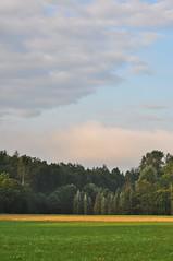 Morgens am Waldrand Explore 18.8.2019 (Uli He - Fotofee) Tags: ulrike ulrikehe uli ulihe ulrikehergert hergert nikon nikond90 burghaun steinbach klausmarbach rosbach plätzer morgenspaziergang fleur sheltie shetlandsheepdog kühe