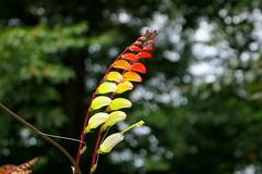 in der Botanik (augenster*chen) Tags: pflanze