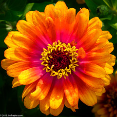 Zowie! Yellow Flame (Jim Frazier) Tags: 2019 20190814cantigny 2019cantigny asteraceae zinnia zinniaelegans zowieyellowflame annual august beautiful beauty blooming blossoming blossoms botanic botanicgardens botanical botanicalgardens cantigny cantignypark centered centralperspective circles class closeup detail dupage dupagecounty floral flowering flowers formalgardens gardening gardens headon horticulture il illinois jimfraziercom linedup loadcode201908 macro minimalism nature orange parks patterns perpendicular photowalk pink plants preserves publicgardens q4 red simplicity sizeover1000 square squaredcircle study summer sunny symmetrical symmetry tightcrop wheaton wheels yellow natural