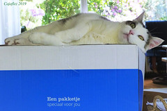 A package especially for you, but without Jasmijn. Jasmijn krijg je er niet bij. (Cajaflez) Tags: pet cat kat katze chat gatto box doos jasmijn coth5