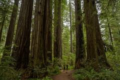 So big! (LutzSchramm) Tags: california kalifornien nikkorz724704s nikonz7 nordamerika redwoodhighway usavereinigtestaatenvonamerika unitedstatesofamerica crescentcity vereinigtestaaten