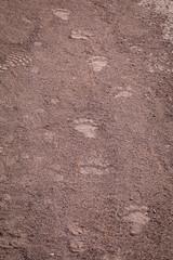 Black Bear Tracks (webersaustin) Tags:
