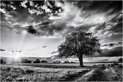 Beauty and Light... (Ody on the mount) Tags: abendlicht anlässe bäume em5ii fototour gegenlicht hdr himmel landschaft mzuiko918 omd olympus pflanzen rahmen schwäbischealb sonnenstrahlen sonnenuntergang wolken bw clouds frame landscape monochrome sw sky sunset tree
