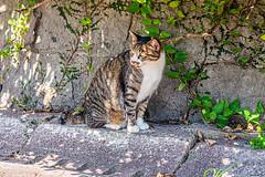 中央区西公園の猫