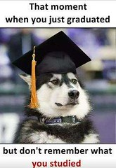 That Moment When You Just Graduated But Don't Remember What You Studied (gagbee18) Tags: animals aww dogs funny graduate jokes students wtf