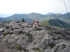 Stardoug am Roßstein (bookhouse boy) Tags: 2019 19juli2019 berge mountains alpen alps bayerischevoralpen rosstein tegernseertal kreuth tegernseerhütte sonnbergalm altweibersteig stardoug