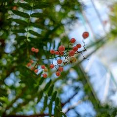 DSCF2809 (LexomIA) Tags: botanique dordogne