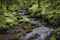 Il ruscello e le felci_ (maurovinco) Tags: stream ruscello felci tree abler nature water acqua wyorkshire uk nikon d750