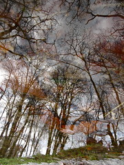 Red Ambush (andressolo) Tags: reflection reflections reflejos trees tree water agua puddle river winter clouds forest nature