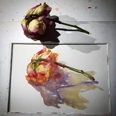 Day 1470. The #rose #painting for today. #watercolour #watercolourakolamble #sketching #stilllife #flower #art #fabrianoartistico #hotpress #paper #dailyproject (akolamble) Tags: rose painting watercolour watercolourakolamble sketching stilllife flower art fabrianoartistico hotpress paper dailyproject