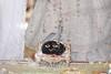 Balarama Purnima 2019 - ISKCON London Radha Krishna Temple Soho Street - 15/08/2019 - IMG_4913 (DavidC Photography 2) Tags: 10 soho street radhakrishna radha krishna temple hare krsna mandir london england uk iskcon iskconlondon internationalsocietyforkrishnaconsciousness international society for consciousness summer thursday 15 15th august 2019 lord balarama purnima jayanti appearance day festival