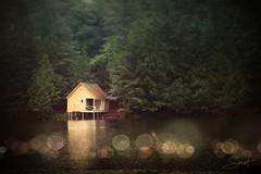 """Reflet de repos ... ( P-A) Tags: reflet repos paix relaxation détente calme lac forêt arbres eau silence nikond800 photos simpa© lackingsmere """"nikonflickraward"""" vivid"""