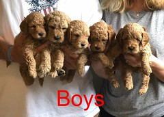 Lucy Jo Boys pic 4 8-17
