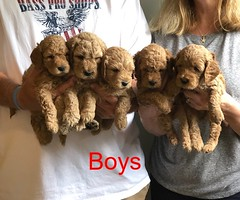 Lucy Jo Boys pic 3 8-17