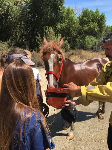 LAFD Rescues Horse From Mud Near Hansen Dam