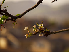 Five Canyons Park 20170218 (caligula1995) Tags: 2017 castrovalley fivecanyonspark hayward clouds cold flowers sunset windy