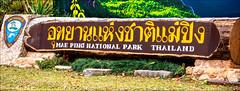 Mae Ping National Park (Steve Arena) Tags: maepingnationalpark lamphun thailand thailandbirding2019 nikon bird birds birding lidistrict