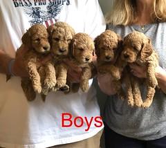 Lucy Jo Boys 8-17