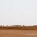 Chalbi desert - camels